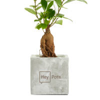 Promotional Concrete Planted Bonsai Pots engraved with your logo by Total Merchandise