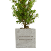 Engraved Christmas Tree Concrete Plant Pots in Rock colour with your design by Total Merchandise