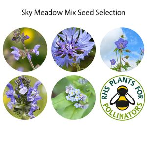 Sky Meadow Bio Grow Pouches are blue meadow flowers suitable for any home of office.