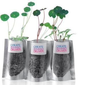 Branded desk plants for business gifts