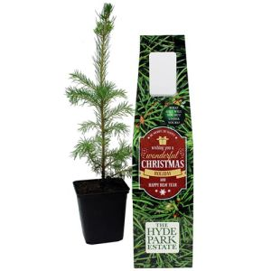 Branded Christmas Tree for Corporate Gifts