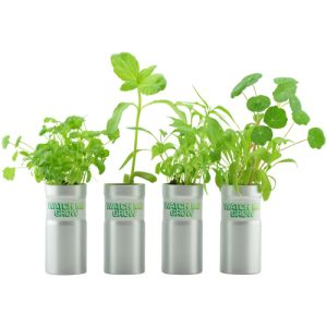 Corporate branded desk plants for business gifts