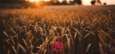 Wheat The Family: The Best Wheat Straw Promotional Products