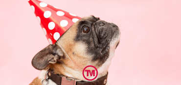 Paw-Fect Promotional Merchandise Inspired By National Dog Day