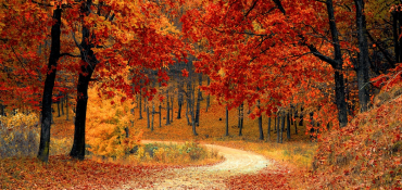 Promotional Autumn Must-Haves for Your UK Business