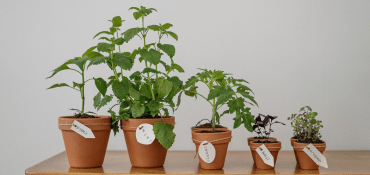 Promotional Seeds & Plants To Grow Your Brand Awareness - Literally!