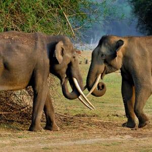 Evolve Back Kuruba Safari Lodge à Parc national de Nagarhole: Asian Elephant