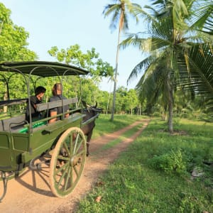 Horathapola Coconut Estate in Yakvila: bullock cart ride