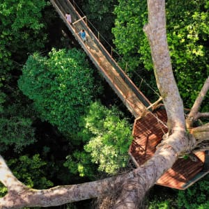 The Datai Langkawi:  Canopy Walk