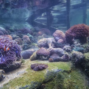 The Andaman in Langkawi: Corals in the Nursery