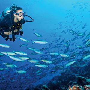 Wa Ale in Mergui Archipel: Diving