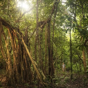 Wa Ale in Mergui Archipel: Forest Exploring