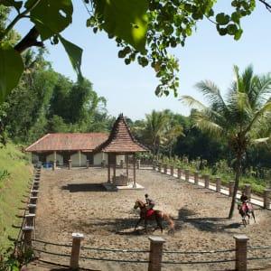 Plataran Borobudur Resort & Spa in Yogyakarta: Horse Riding