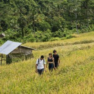 Wapa di Ume Sidemen à Ouest de Bali: Rice Field Trekking With Guide