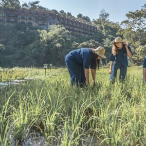 Anantara Golden Triangle Elephant Camp & Resort in Goldenes Dreieck: Rice Planting
