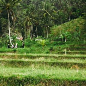 Wapa di Ume Sidemen à Ouest de Bali: Trekking