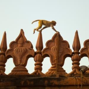 Reise zum heiligen Ganges ab Delhi: Agra: Monkey at Taj Mahal
