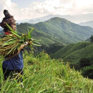 Le nord fascinant du Laos de Luang Prabang: Akha woman field