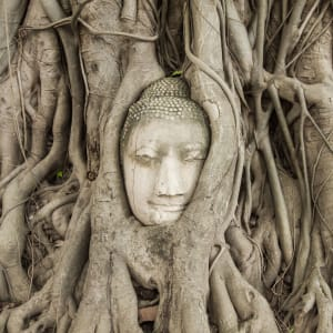 Streifzug durch Bangkoks Umgebung: Ayutthaya Buddha Head