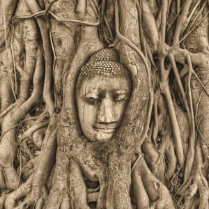 Höhepunkte Thailands ab Bangkok: Ayutthaya Buddha Head sepia