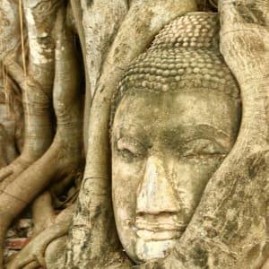Unbekannter I-San ab Bangkok: Ayutthaya: Buddha in tree