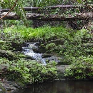 Les hauts lieux de Bornéo option longhouse de Kuching: Bako National Park