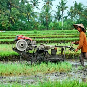 Une matinée au village à Sud de Bali: Bali Farmer