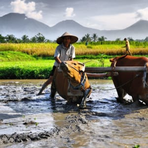 Nature et traditions à l'est de Bali de Sud de Bali: Bali farmer