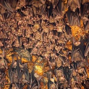Bali compacte de Sud de Bali: Bali Goa Lawah Bat Cave Temple
