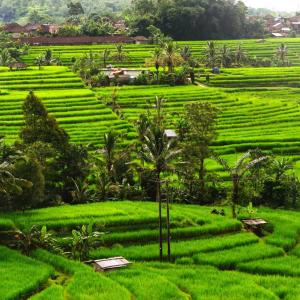 Bali aktiv erleben ab Südbali: Bali Jatiluwih Rice terraces