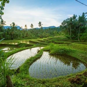 Au Coeur de Bali à Sud de Bali: Bali Jatiluwih Rice terraces