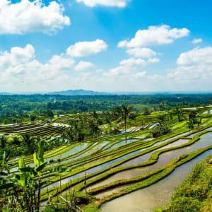 Transfert combiné avec des excursions Bali Sud – Bali Nord à Sud de Bali: Bali Jatiluwih Rice terraces