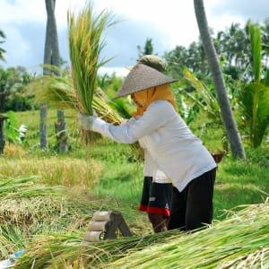 Erlebnisreiches Bali ab Südbali: Bali local farmers