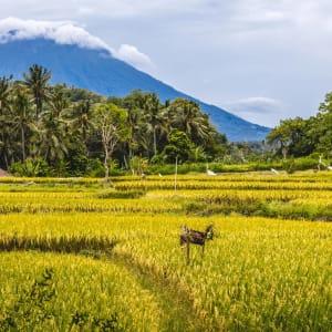 Höhepunkte Balis ab Südbali: Bali Mount Agung with rice field