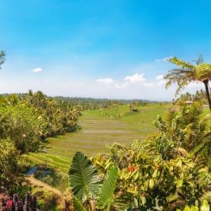 Nature et traditions à l'est de Bali de Sud de Bali: Bali Rice fields