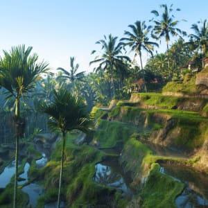 Découverte active de Bali de Sud de Bali: Bali Rice Terraces