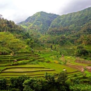 Erlebnisreiches Bali ab Südbali: Bali Rice Terraces