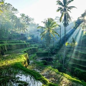 Höhepunkte Balis ab Südbali: Bali Ubud Rice Terraces