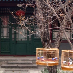 China aktiv erleben ab Peking: Beijing Hutong