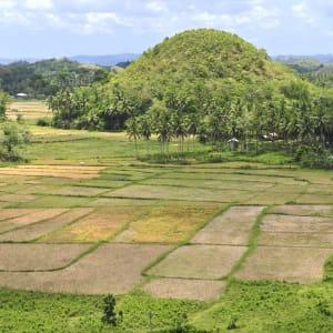 D'île en île individuellement aux Philippines de Manille: Bohol Chocolate Hills