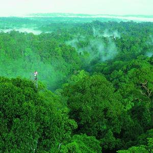 Les hauts lieux de Bornéo avec option