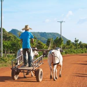 Traversée de Phnom Penh à Angkor: Cambodia farmer on the way to his farm