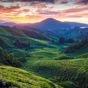 Malaisie authentique de Kuala Lumpur: Cameron Highlands Sungai Palas Tea Plantation