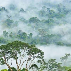 Borneo Wildlife / Tabin Wildlife Reserve ab Kota Kinabalu: Danum Valley misty morning