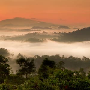 Bornéo Wildlife / Tabin Wildlife Reserve de Kota Kinabalu: Danum Valley panorama sunrise