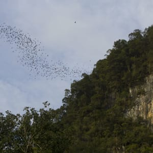 Les hauts lieux de Bornéo de Kuching: Deer Cave Mulu national park