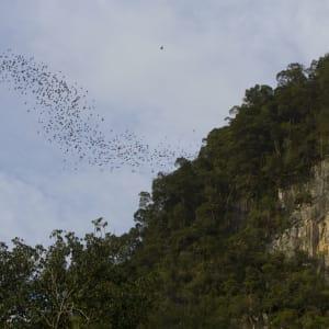 Höhepunkte Borneos ab Kuching: Deer Cave Mulu national park