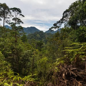 Sarawak – la nature dans toute sa splendeur de Kuching: Dense mixed lowland rainforest