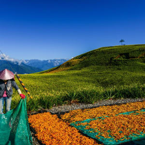 Les hauts lieux de Taïwan de Taipei: Drying Process of Tiger Lilies