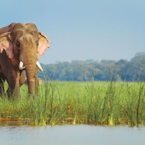 Jaagir Lodge Safari ab Lucknow: Elephant by the river